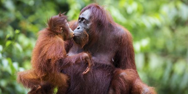 Luxury Borneo Holidays