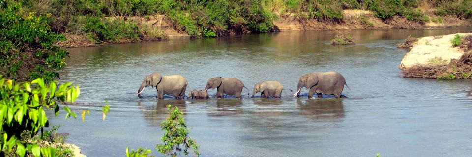 Family of elephants in the river