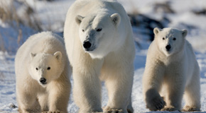 Mum and cubs