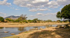 Ruaha National Park Banner