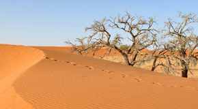 Namib-Nakluft National Park & Sossusvlei Thumb