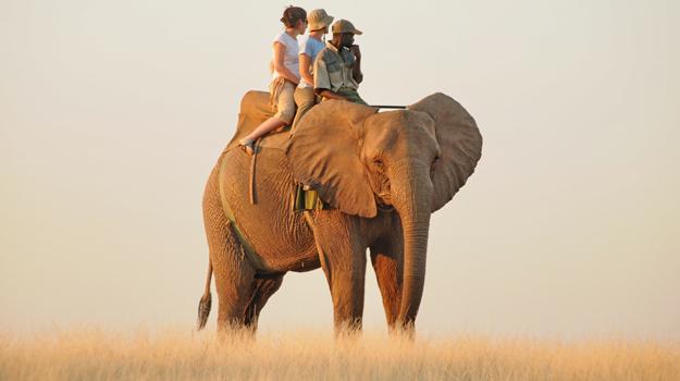 Elephant Rides Zimbabwe