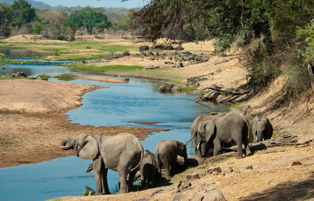 Elephants, Ruaha National Park, Tanzania, Africa