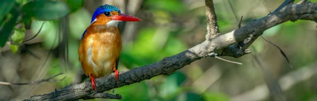Kingfisher, Selous Game Reserve, Tanzania