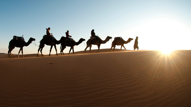 Camel riding in the desert, Morocco