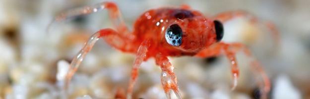 Baby Crab, Justin Gilligan, Cita Image Library