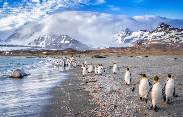 Penguins and seal, Antarctica