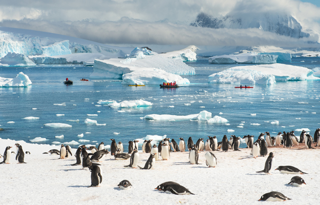 Penguins. Antarctica, by Anthony Smith