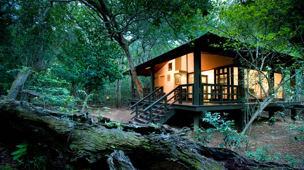 Get close to nature at Phinda Lodge