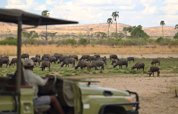 Safari, Ruaha National Park, Tanzania