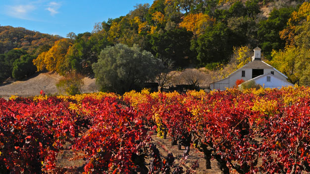 Vineyards in the fall, Sonoma