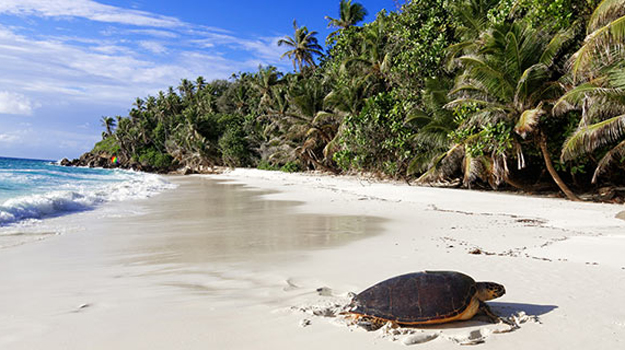 Turtle on beach, Seychelles